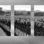 winery-2