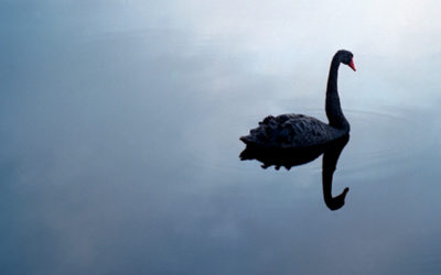 UMBC, Black Swans, and your Financial Health
